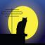 月光国际 v1.0 苹果版